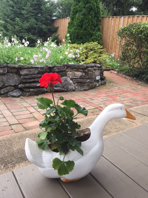 duck and flower