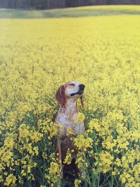 Maddie in flower field